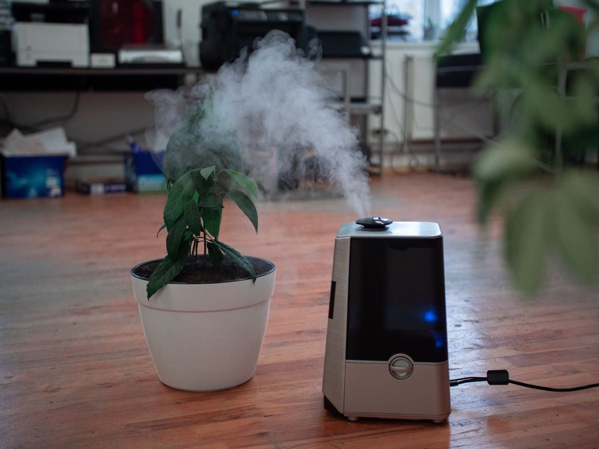 air purifier with plant behind