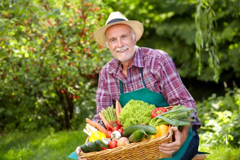 man harvesting vegetables