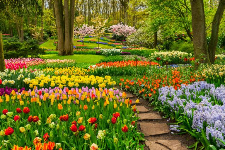 garden forest landscape