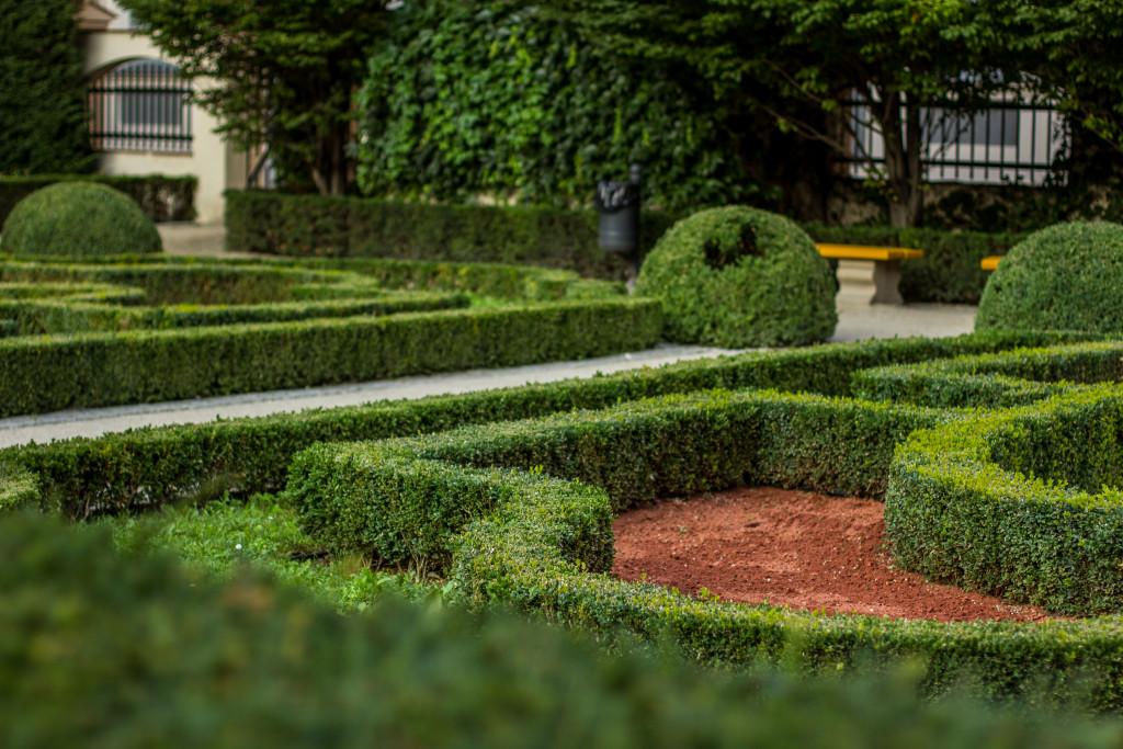 hedge landscape